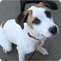 Adopt A Pet :: Lucy - Westfield, IN
