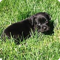 Adopt A Pet :: Jimi - Marlton, NJ
