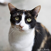 Adopt A Pet :: Oprah - Los Angeles, CA