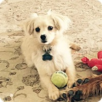 Adopt A Pet :: Zuul - San Diego, CA