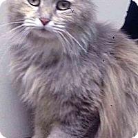Adopt A Pet :: ADOPTED!!!   Tiffany - Oswego, IL