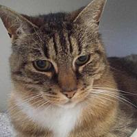 Adopt A Pet :: Stewart - Hamilton, ON