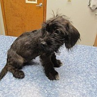 Adopt A Pet :: Snuffy - Wharton, TX
