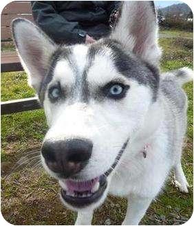 Husky Mix Dog for adoption in Grants Pass, Oregon - Captain Jack
