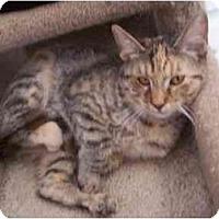 Adopt A Pet :: Dahlia - El Cajon, CA