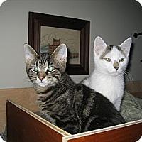 Adopt A Pet :: Jack & Jerry - Portland, ME