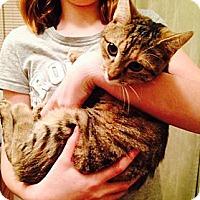 Adopt A Pet :: Megan - Pittstown, NJ
