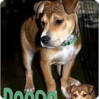 Adopt A Pet :: Reese - Fresno, CA