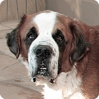 Adopt A Pet :: BEAR - Glendale, AZ