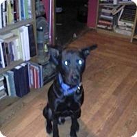 Adopt A Pet :: Blake - San Antonio, TX