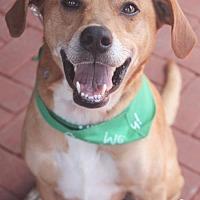 Adopt A Pet :: Buck - Washington, DC