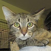 Adopt A Pet :: Jose - Reeds Spring, MO