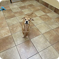 Adopt A Pet :: Kenny *Petsmart GB* - Appleton, WI