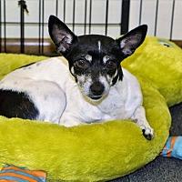 Adopt A Pet :: Sucy - Tavares, FL