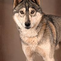 Adopt A Pet :: Kai - Cedar Crest, NM