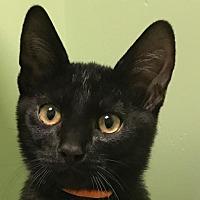 Adopt A Pet :: Rio II - Auburn, CA