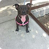 Adopt A Pet :: Piglet (courtesy post) - Whittier, CA