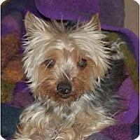 Adopt A Pet :: Dixie - Charlotte, NC
