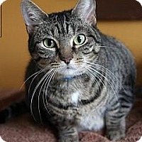 Adopt A Pet :: Peanut - Lancaster, MA