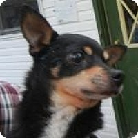 Adopt A Pet :: Carlos ADOPTED!! - Antioch, IL