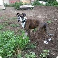 Adopt A Pet :: Casey - Raymond, NH