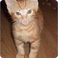 Adopt A Pet :: Autumn - Fort Lauderdale, FL