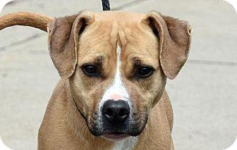 Hound (Unknown Type) Mix Dog for adoption in New Haven, Connecticut - SEEKER