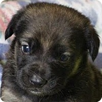 Adopt A Pet :: Cooper - Minneapolis, MN
