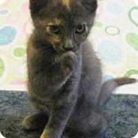 Adopt A Pet :: Chantel - North Highlands, CA