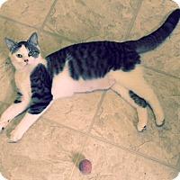 Adopt A Pet :: Catalina - St. Louis, MO
