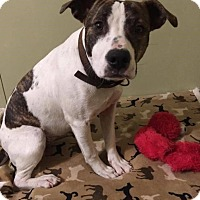 Adopt A Pet :: Leyla - Kendall, NY