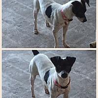 Adopt A Pet :: binx - Homestead, FL