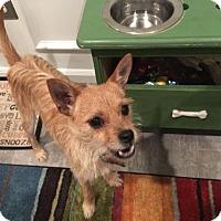 Adopt A Pet :: Skip - Baltimore, MD