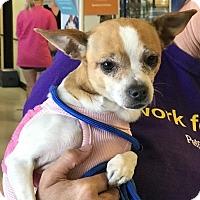 Adopt A Pet :: Gismo - Costa Mesa, CA