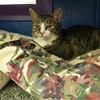 Adopt A Pet :: Helga - Fresno, CA