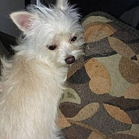 Adopt A Pet :: Polar - Iroquois, IL