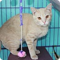 Adopt A Pet :: Bootsie #2 - Erwin, TN