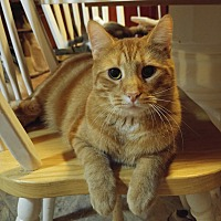 Adopt A Pet :: RED - Harmony, NC