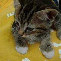 Adopt A Pet :: Timothy - Myrtle Beach, SC