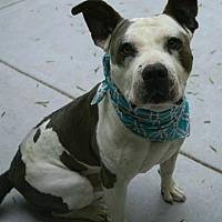 Adopt A Pet :: Brody - Dublin, CA