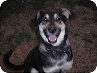 Collie/Shepherd (Unknown Type) Mix Dog for adoption in Braintree, Massachusetts - Maxie
