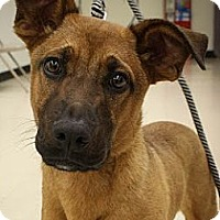 Adopt A Pet :: Brewster - Broomfield, CO