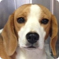 Adopt A Pet :: Maggie - Canoga Park, CA