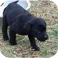 Adopt A Pet :: Jalapeno - New Boston, NH
