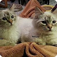 Adopt A Pet :: Wilma - Portland, OR