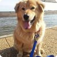 Adopt A Pet :: Dakota - Yorktown, VA