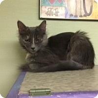 Adopt A Pet :: Fluffy - Medina, OH