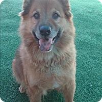 Adopt A Pet :: Malachi - Sacramento, CA