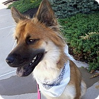 Adopt A Pet :: Shakira -ADOPTED ! - Tipp City, OH