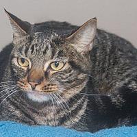 Adopt A Pet :: Emmy - Elmwood Park, NJ